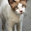 Cat on Street, Bangkok