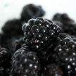 Bowl of Fresh Blackberries - Healthy Eating