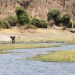 Elephants - Chobe River, Botswana, Africa