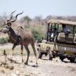 Kudu - Chobe N.P. Botswana, Africa