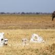 Bones - Chobe N.P. Botswana, Africa