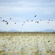 Bird - Lake Opeta - Uganda, Africa