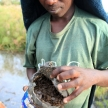 Ants - Uganda, Africa