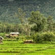 Rice Fields - Laos