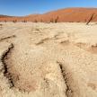 Dead Vlei - Sossusvlei, Namibia