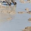 Zebra at Waterhole - Etosha, Namibia