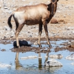 Etosha Safari Park in Namibia