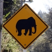 Elephant Sign - Phuket, Thailand