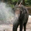 Elephant Show - Singapore Zoo, Singapore