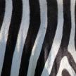 Zebra Skin Pattern - Kenya