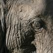 Elephant Skin. Tanzania, Africa