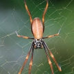 Spider - Fraser Island, UNESCO, Australia