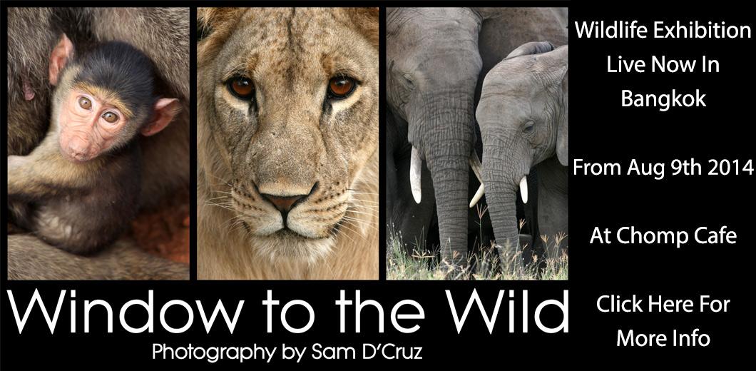 http://www.samdcruz.com/general/window-to-the-wild-wildlife-photography-exhibition