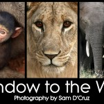 Window to the Wild : Wildlife Photography Exhibition