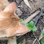 Cat Hunting Snake