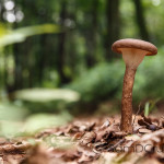PHOTO OF THE DAY : Wild Mushroom