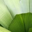 Leaf - Botanical Gardens, Singapore